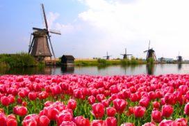 Nederland Startupland?