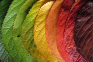 Achter de kleurentheorie: hoe maak je je het gedachtegoed van 'Leren veranderen' eigen?