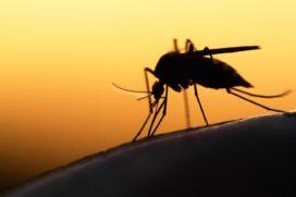 Philip Holt: De principes van Mosquito Leiderschap