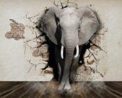 De Bandbreedte: het olifantenpaadje