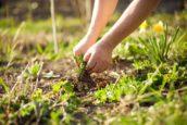 Strategieën laten groeien als onkruid in een tuin