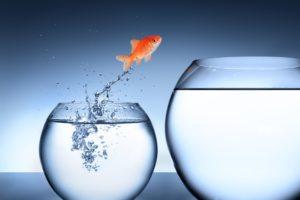 Verandering als nieuwe status quo